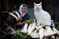 grandmother-and-cat-miyoko-ihara-fukumaru-7