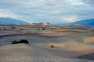 478-sand-dunes-0204-088-v2