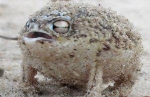 frog-cute
