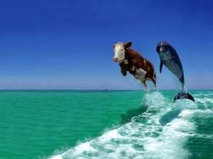 Funny Dolphin_1