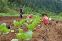 Planting-Squash-Alpha-Farm-2009