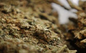 06-16-marijuana_full_600