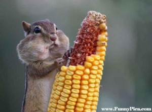 Funny-Squirrels-Funny-Squirrel-Picture-02-FunnyPica.com_-570x421