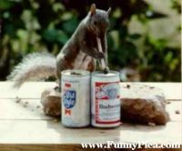 Funny-Squirrels-Funny-Squirrel-Picture-03-FunnyPica.com_