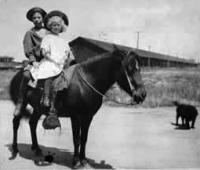 steinbeck-pony