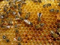 beehive-pic