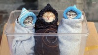wrapped-up-kittens_85534-934x
